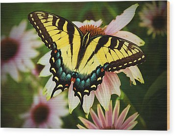 Tiger Swallowtail Butterfly Wood Print by Michael Porchik