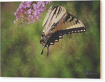 Tiger Swallowtail-featured In Photography And Textures And Harmony-happiness Groups Wood Print by EricaMaxine  Price