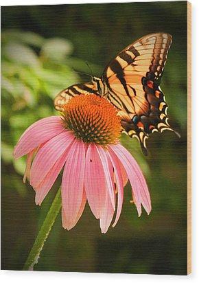 Tiger Swallowtail Feeding Wood Print by Michael Porchik
