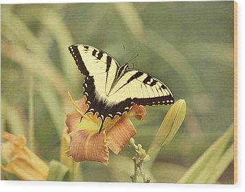 Tiger Swallowtail Wood Print by Kim Hojnacki