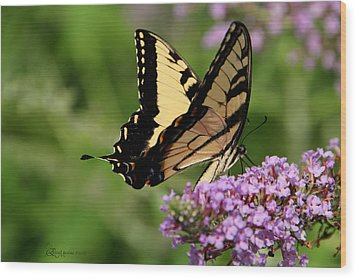 Tiger Swallowtail On Butterfly Bush 2 - Featured In 'comfortable Art' And 'flower W Co' Macro Groups Wood Print by EricaMaxine  Price