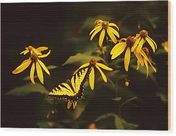 Tiger Swallowtail Perch  Wood Print