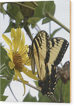 Wood Print featuring the photograph Tiger Swallowtail by Phyllis Peterson