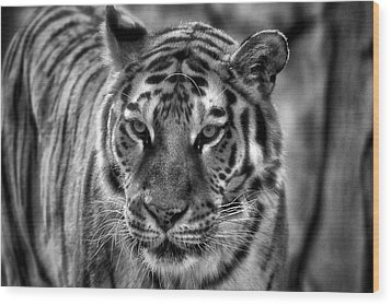 Tiger Tiger Monochrome Wood Print