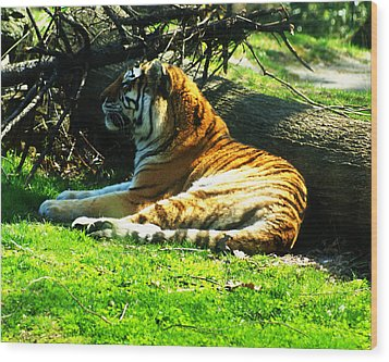 Wood Print featuring the photograph Tiger Too by B Wayne Mullins