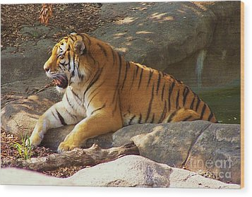 Tiger Tough Wood Print by Brigitte Emme