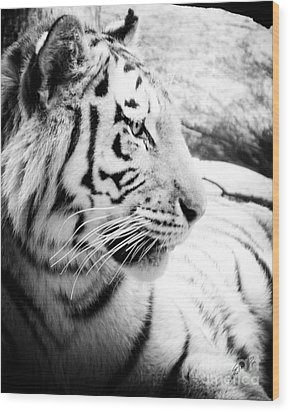 Wood Print featuring the photograph Tiger Watch by Erika Weber