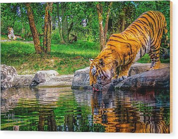 Tigers Pond Wood Print by Glenn Feron