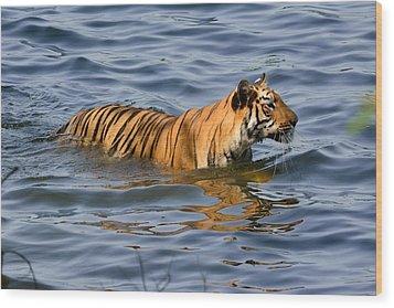 Tigress Of The Lake Wood Print by Fotosas Photography