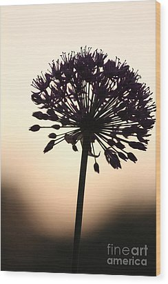 Tilted Silhouette Allium Wood Print
