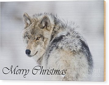 Timber Wolf Christmas Card 2 Wood Print by Michael Cummings
