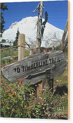 Timberline Trail Wood Print by Cari Gesch