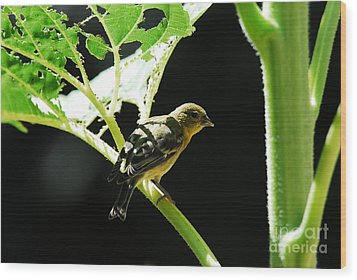 Wood Print featuring the photograph Time For Lunch by Laurianna Taylor