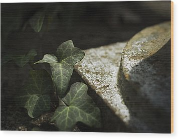 Wood Print featuring the photograph Time Is The Substance by Rebecca Sherman