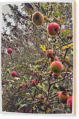 Time To Pick The Apples Wood Print by Garren Zanker