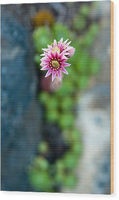 Wood Print featuring the photograph Tiny Blossom by Erin Kohlenberg