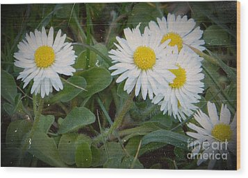 Tiny Daisies Wood Print by Chalet Roome-Rigdon