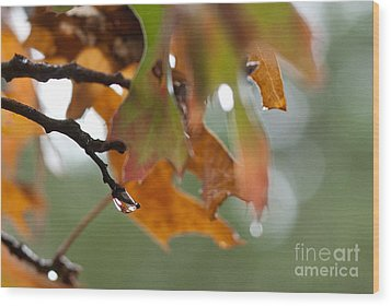 Tiny Leaf Wood Print by Barbara Shallue