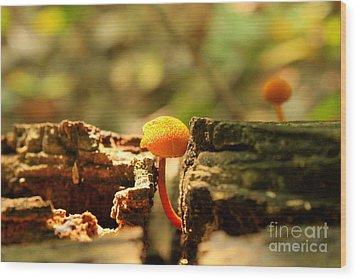Tiny Mushroom Wood Print