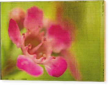 Wood Print featuring the photograph Tiny Pink by Takeshi Okada