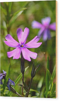 Tiny Purple Flower #1 Wood Print
