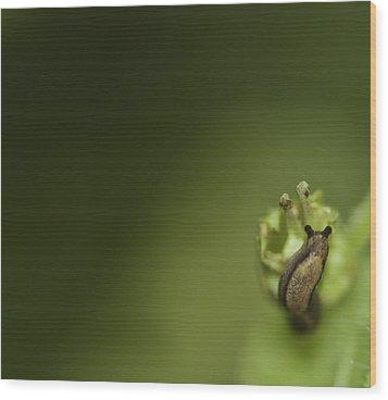 Tiny Slug Wood Print by Sarah Crites