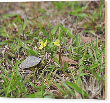 Tiny Turtle Wood Print by Al Powell Photography USA