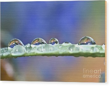 Tiny Waterworld And A Leaf Wood Print by Heiko Koehrer-Wagner