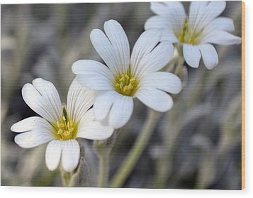 Tiny White Flowers #1 Wood Print
