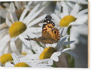 Wood Print featuring the photograph Tip-toeing On Daisies by Greg Graham