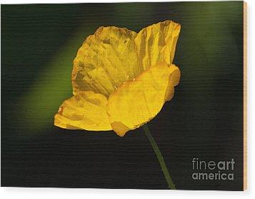 Tissue Paper Petals Wood Print by Jennifer Apffel