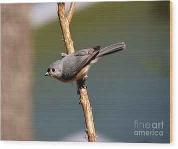 Wood Print featuring the photograph Titmouse by Lisa L Silva
