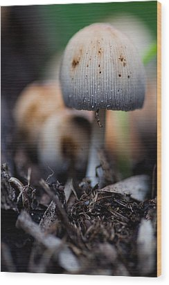 Toad Grove 1 Wood Print by Carole Hinding