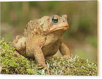Toad Wood Print by John Bell