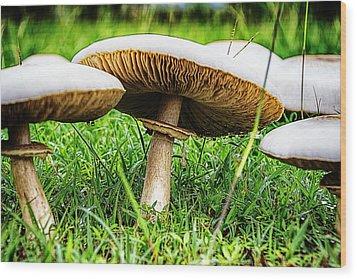 Toadstools V2 Wood Print by Douglas Barnard