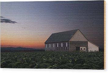 Tobacco Field Wood Print