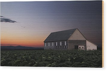 Tobacco Field Wood Print by Andrea Galiffi