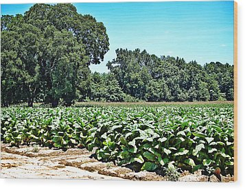 Wood Print featuring the photograph Tobacco Field by Linda Brown