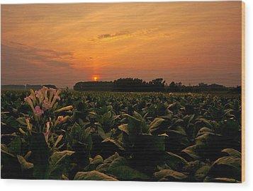Tobacco Flowers At Dawn  Wood Print