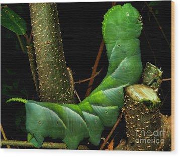 Tobacco Worm Wood Print by Christy Ricafrente