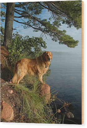 Toby On Point  Wood Print by Sandra Updyke