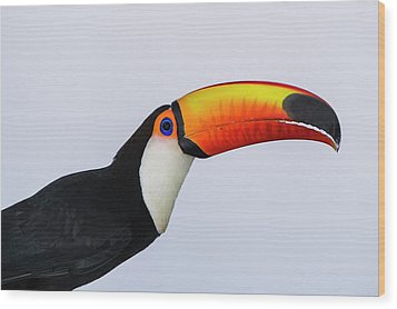 Toco Toucan (ramphastos Toco Wood Print by Pete Oxford