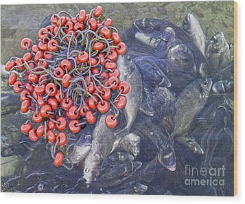 Today's Harvest Wood Print by Stelios Kleanthous