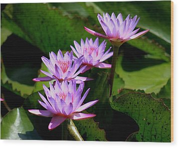 Wood Print featuring the photograph Together We Bloom - Violet Lily by Ramabhadran Thirupattur