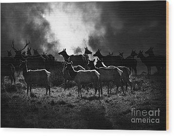 Tomales Bay Harem Under The Midnight Moon - 7d21241 - Black And White Wood Print by Wingsdomain Art and Photography
