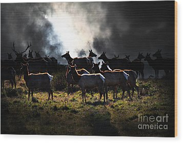 Tomales Bay Harem Under The Midnight Moon - 7d21241 Wood Print by Wingsdomain Art and Photography