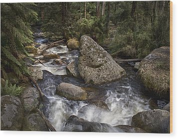 Wood Print featuring the photograph Tooronga River by Kim Andelkovic