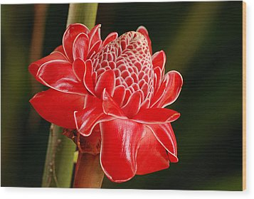 Wood Print featuring the photograph Torch Ginger by Lorenzo Cassina