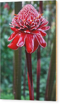 Torch Ginger In Hawaii Wood Print by Venetia Featherstone-Witty