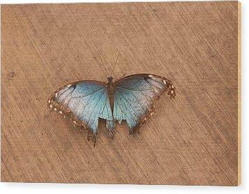 Torn Beauty Wood Print